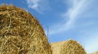 """Sisma, Vaccari """"Proroga per le imprese agricole già chiesta all'Ue"""""""