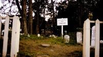 """Cimitero animali, Arletti """"Tolto ogni ostatolo, attendiamo i privati"""""""