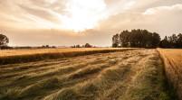 Festa Carpi, mercoledì presentazione libro sull'evoluzione agricola
