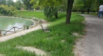"""Mirandola, Mantovani """"Possiamo fare subito tre parchi pubblici"""""""